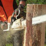 Tree Service Carmel