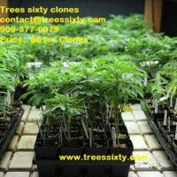 Trees Sixt  Nursery