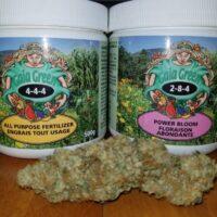 Order weed online Uk