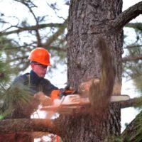 Tree Lopping Ipswich